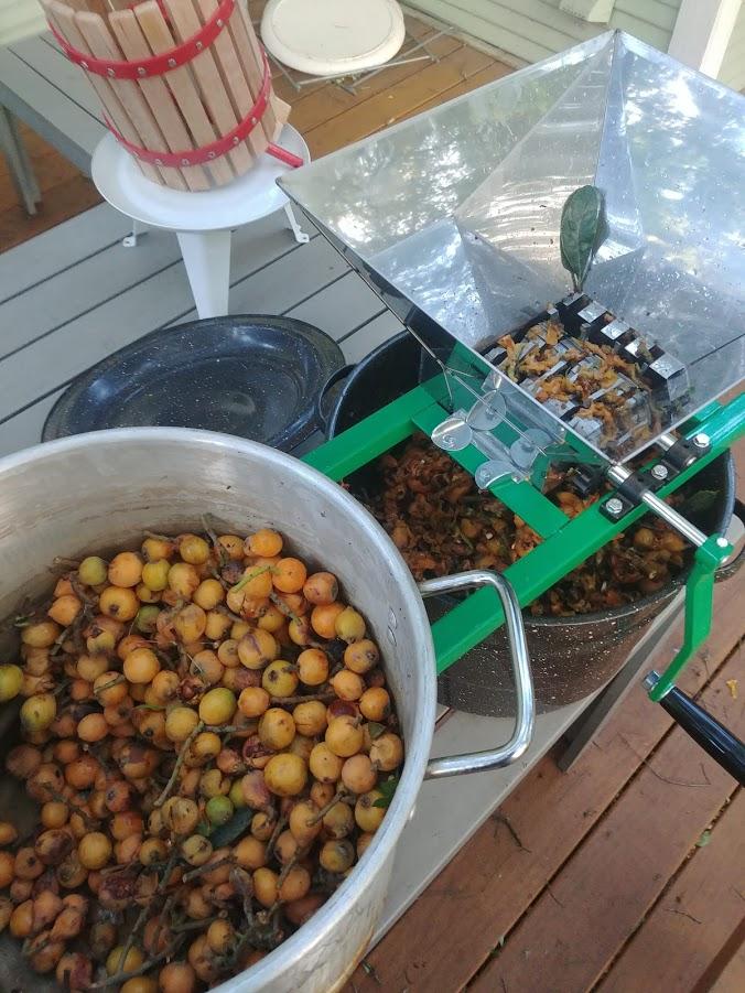 pot of loquats, fruit crusher, and a mini wine press